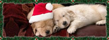 dogs-holidays