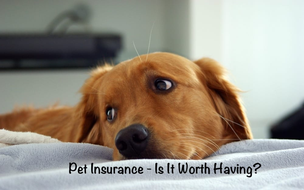 Pet Insurance Is It Worth Having?